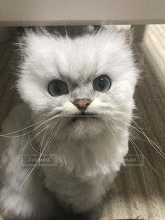猫の写真・画像素材[837534]