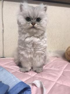 猫の写真・画像素材[837535]
