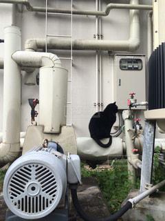 工場の猫の写真・画像素材[837895]