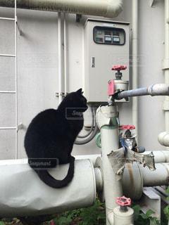 工場の猫の写真・画像素材[837897]