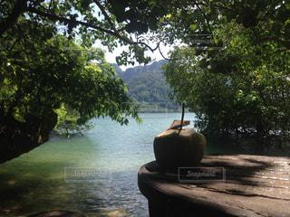 タイのビーチとココナッツジュースの写真・画像素材[839397]