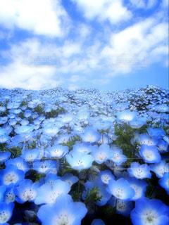青い世界の写真・画像素材[837678]