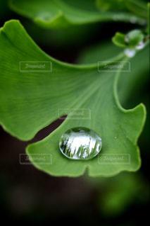 雫の宝石の写真・画像素材[837683]