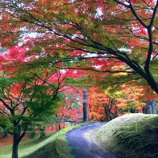 京都風!?の写真・画像素材[837688]