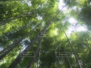 竹寺の写真・画像素材[837692]