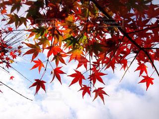 赤 × 青の写真・画像素材[839731]