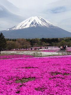 富士の麓の写真・画像素材[841737]
