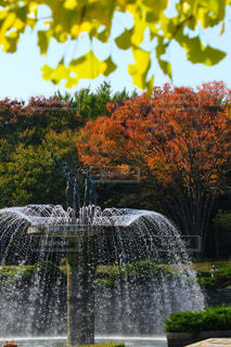 紅葉と噴水の写真・画像素材[863925]