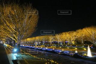 ライトアップされた街の写真・画像素材[938199]