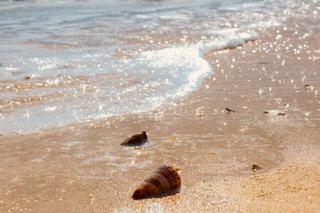 ビーチの上を歩く鳥の写真・画像素材[1006407]