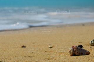 砂浜と貝の写真・画像素材[1006408]