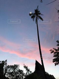 ピピ島の夕陽とヤシの木の写真・画像素材[841673]