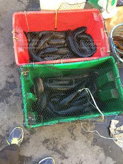 マレーシア コタキナバル 市場 魚の写真・画像素材[838556]