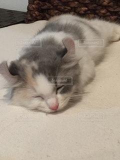 猫 - No.838684