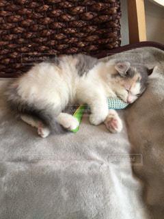 猫 - No.838688