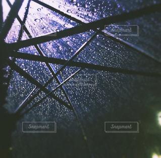 雨粒の写真・画像素材[838969]
