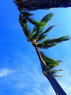 自然の写真・画像素材[56988]
