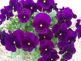 花の写真・画像素材[1091185]