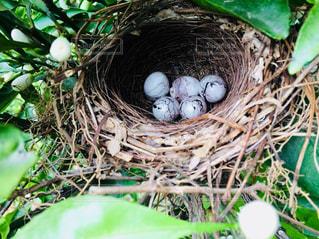 草の中の卵と巣の写真・画像素材[1176083]