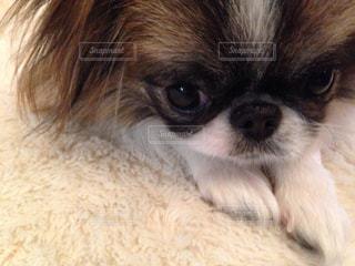 犬の写真・画像素材[839618]