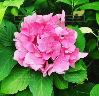 近くの花のアップ - No.844498