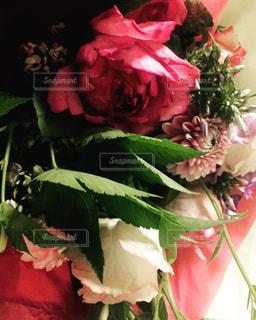 花の写真・画像素材[839717]