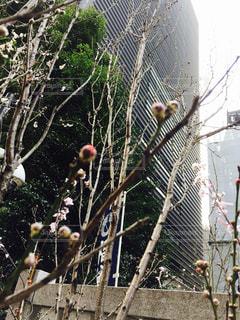 春の訪れの写真・画像素材[958141]
