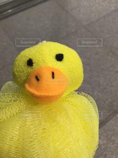黄色のアヒルスポンジの写真・画像素材[1526543]