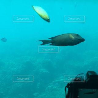 カモメの群れが水に泳いでいます。の写真・画像素材[848579]