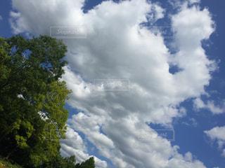 空には雲のグループの写真・画像素材[848584]
