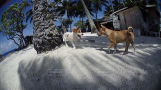 兄弟犬の写真・画像素材[840163]