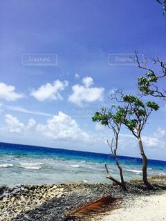 南の島の写真・画像素材[840166]