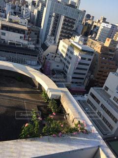 屋上に咲く雑草の写真・画像素材[1418412]