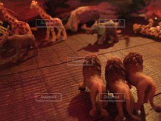 ライオンが見つめる先にの写真・画像素材[1418414]