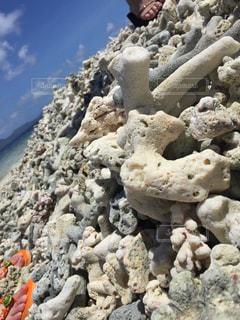 珊瑚の浜辺の写真・画像素材[1633323]