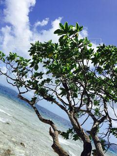 海辺の木の写真・画像素材[1633324]