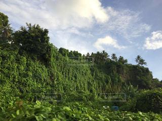 崖から緑の写真・画像素材[1633330]
