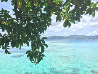 海辺の木の写真・画像素材[1633335]