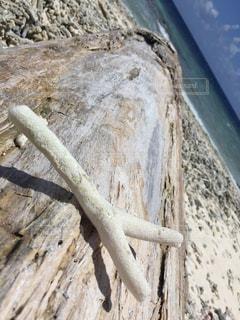流木の上のYの写真・画像素材[1633340]