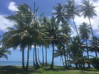 海と青空にパームの写真・画像素材[1633343]