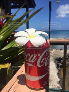 南国でCoca-Colaの写真・画像素材[1633344]