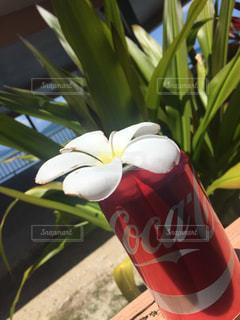 南国Coca-Colaの写真・画像素材[1633345]
