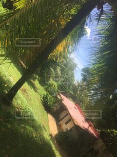 パームごしのお家の写真・画像素材[1633360]