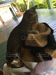 イタズラ子猫の写真・画像素材[1633361]