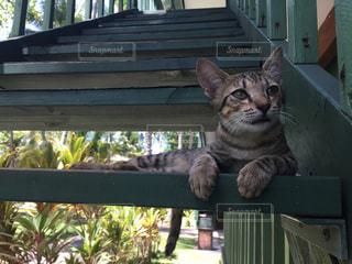 階段の子猫の写真・画像素材[1633362]