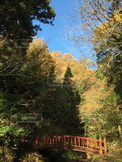 山の中の橋の写真・画像素材[1644539]