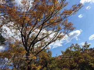 大きな木の写真・画像素材[1644542]