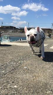 港を走る犬の写真・画像素材[1847714]