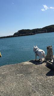港の端っこ犬の写真・画像素材[1847726]