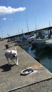 港を散歩犬の写真・画像素材[1847727]